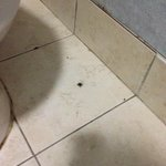 dead bugs in the bathroom
