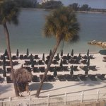 Photo de Wyndham Garden Clearwater Beach