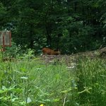 Roe deer in the forest just behind our caravan