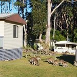 a room with a roo