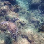 Swimming with turtle at Castara