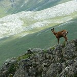 An encounter during a trek in the mountains.
