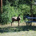 Methow River Lodge & Cabinsの写真