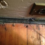 Dirt, dead beetles and cobwebs at outlet behind bed.