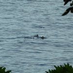 Birds eye view of Spinner Dolphins from our room