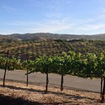 Φωτογραφία: Seven Quails Vineyards Bed & Breakfast