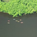 Aerial Photo of VI's Kayak Tour