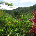 Hibiscus Valley Inn의 사진