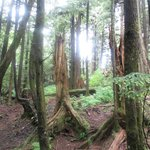 amazing trees at Settlers Cove State Recreation Site