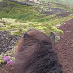 Islenski Hesturinn, The Icelandic Horse - Riding Tours Foto