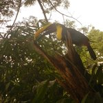 toucan at Manuel Antonio Estates