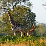 Photo de Londolozi Private Game Reserve