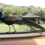 Great Rift Valley Lodge & Golf Resort照片