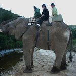 Botlierskop Private Game Reserve resmi