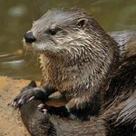 Otters are definitely one of our visitors' favorite animals!