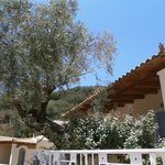 Foto de Alonissos Beach Bungalows & Suites Hotel