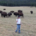 A heard of wild buffalo or bison less than 1 mile from Demotte Campground 4th of July weekend 20