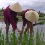 Photo of Jack Tran Hoi An Private Eco-Tour