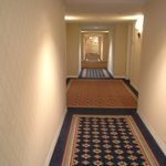 Φωτογραφία: Doubletree Hotel Chicago Oak Brook