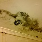 mould in our room