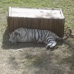 Cango Wildlife Ranch Foto