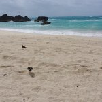 Hotel beach with friendly Sandpipers