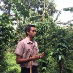 our guide, ulysses, on ur tour of the coffee plantation