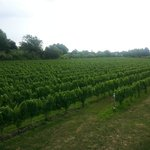 Foto di Sannino Vineyard B and