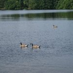 Champneys Forest Mere Foto