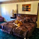 King Bed, Dog Friendly Room