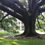 Houmas House Plantation and Gardens Foto