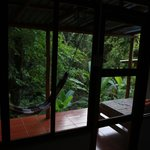 View from room One towards the jungle