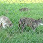 صورة فوتوغرافية لـ ‪Howlers Inn Bed & Breakfast and Wolf Sanctuary‬
