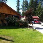 Foto de Solace on the Mountain Bed & Breakfast