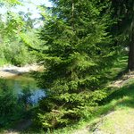 Photo of Camping Sobec