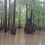 The Last Wilderness Swamp Tour
