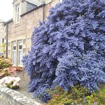 Bluebell House Foto