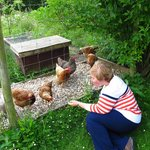 I had fun with their chickens!
