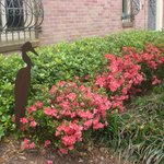 The Stockade with Spring Azaleas