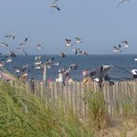 Rehoboth Beach 2014..someone feeding the seagulls