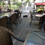 Momma Kitty is The Patio Hostess!!