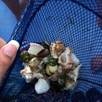 Shells (mostly given by the captain since we couldn't find any that weren't alive)