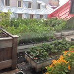 view of one of the rooftop gardens from our window