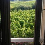Room view of vineyard