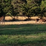 Family of deer enjoying the lawn in front of the Inn