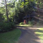 Foto de Ferntree Rainforest Lodge