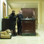The resident pup at the Concierge desk