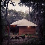 Forest Rise Eco Retreat의 사진