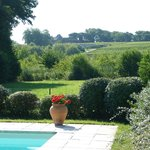 View from pool towards Ch. d'Yquem