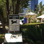 Pet friendly area by the pool